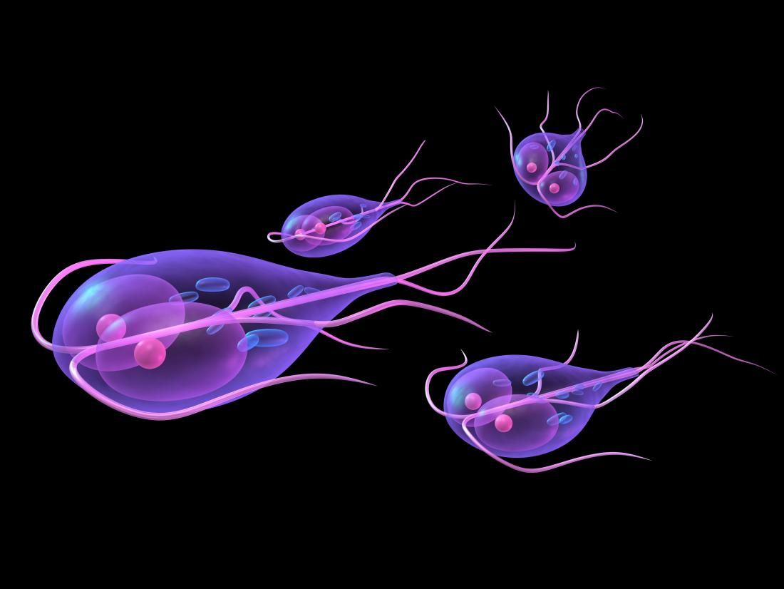 giardia meaning in latin does giardia cause blood in stool
